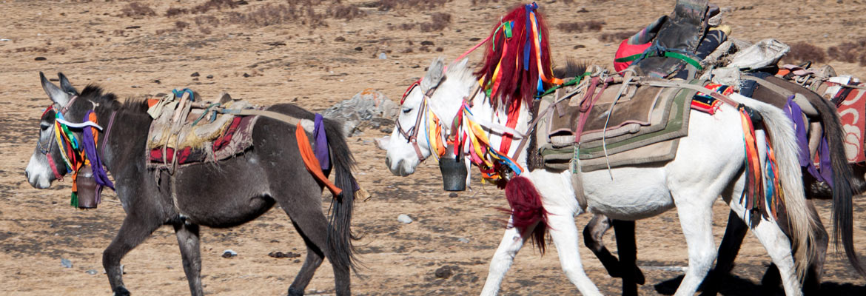 donkey-and-horse1170