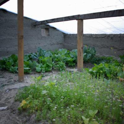 greenhouse1_sa-1000