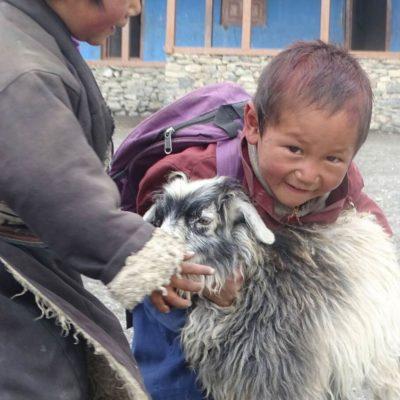 k-goat