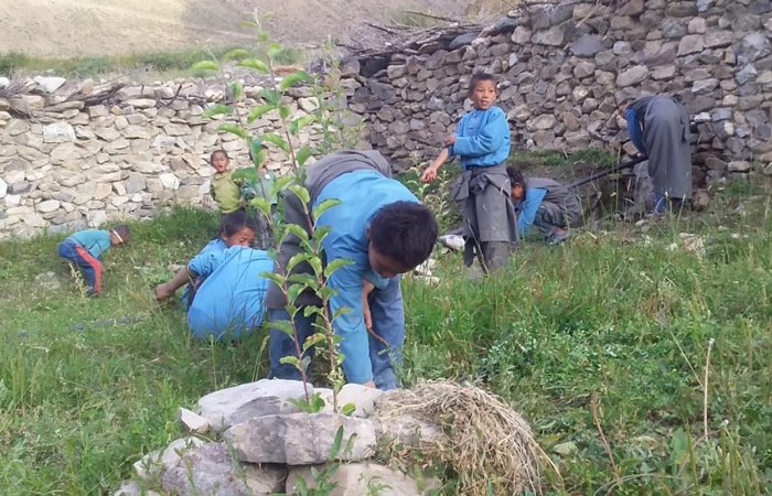 cleaning-the-bushes-in-apple-farming-700